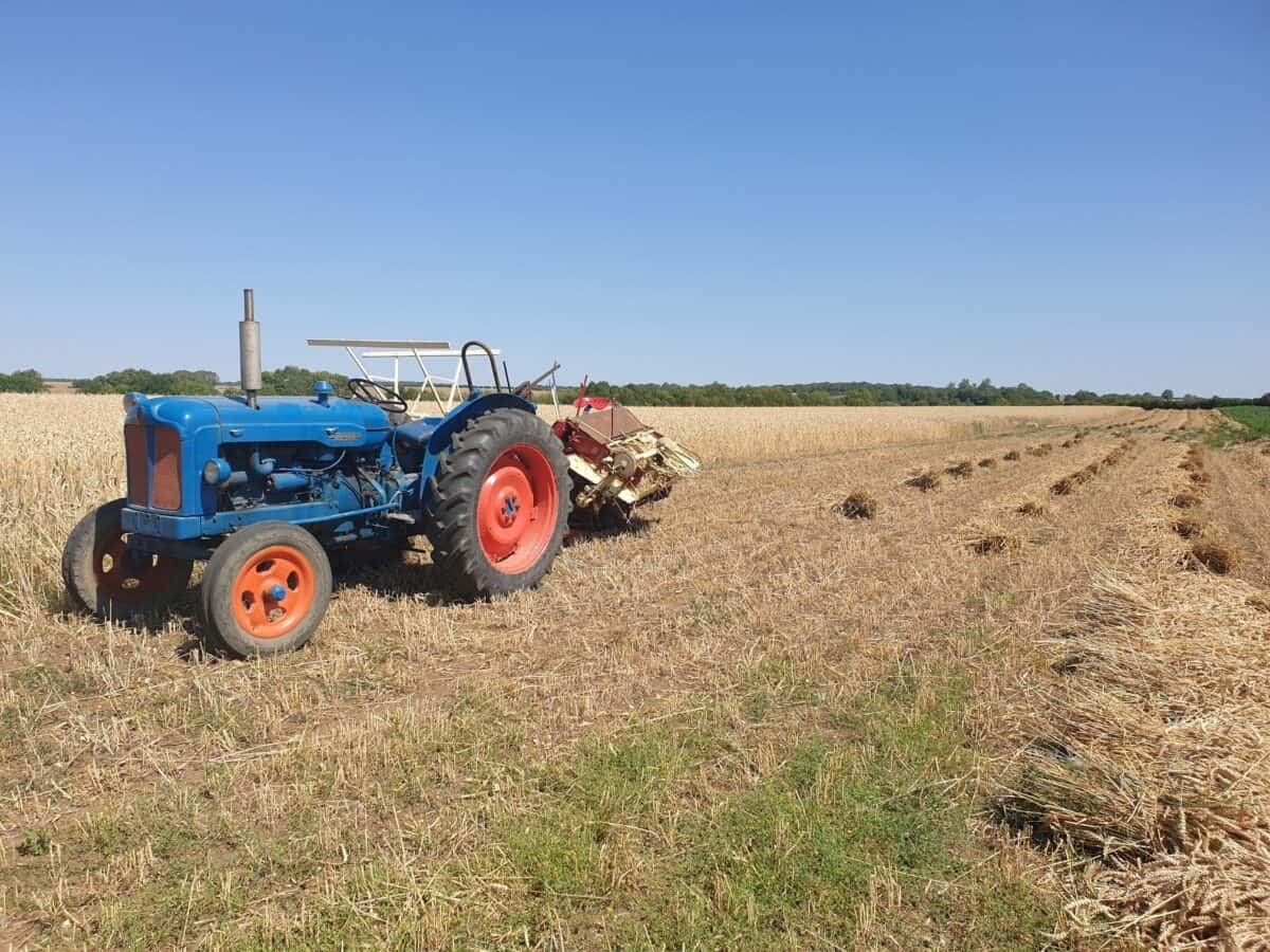 Grow own straw for thatching