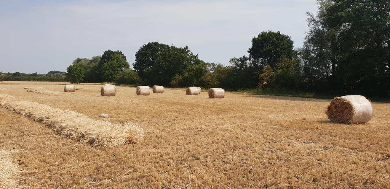 Straw for thatching (10)