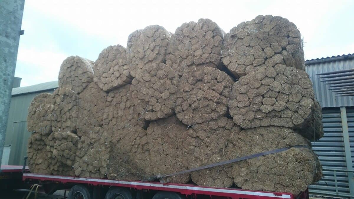 Straw for thatching (2)