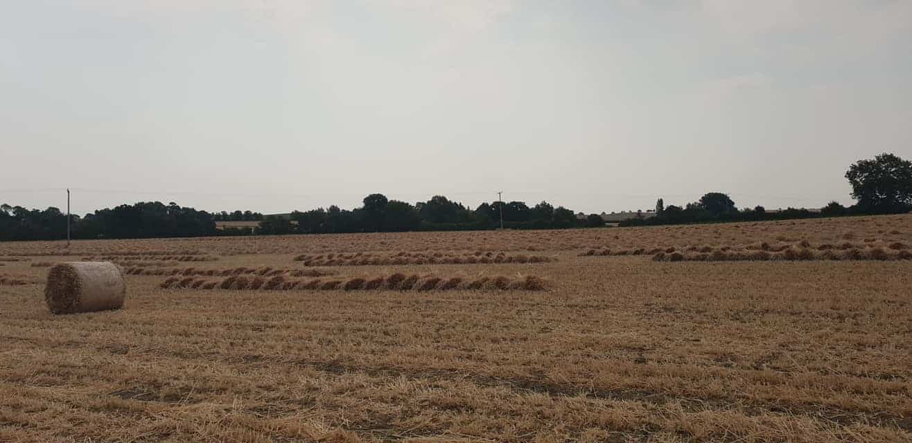 Straw for thatching (5)