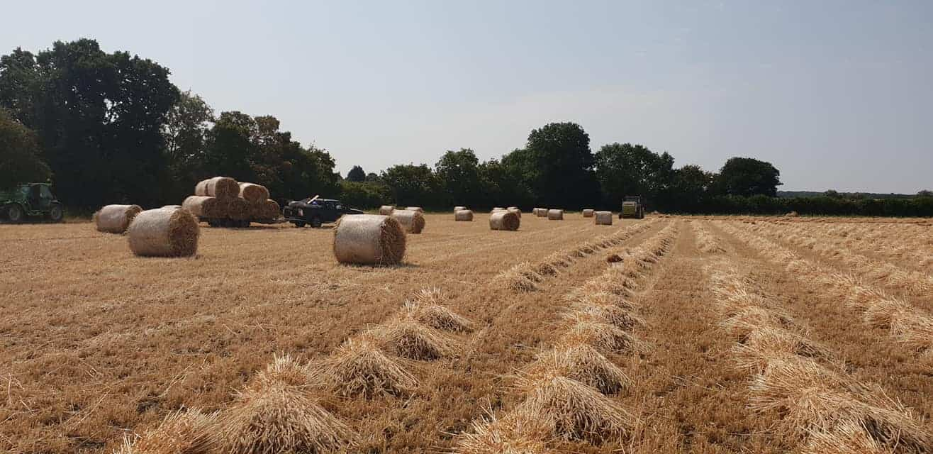 Straw for thatching (7)