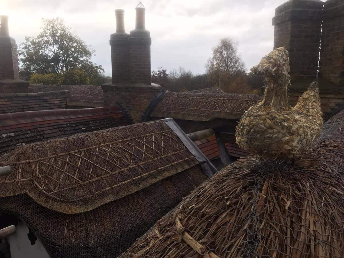 Thatching job in Stonely Cambridgeshire (5)