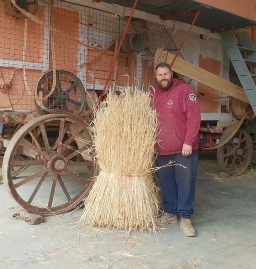 Thatching straw